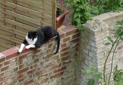 Irgendein Nachbarskater - oder doch ne Katze?