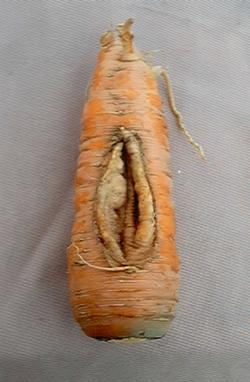 Vaginakarotte